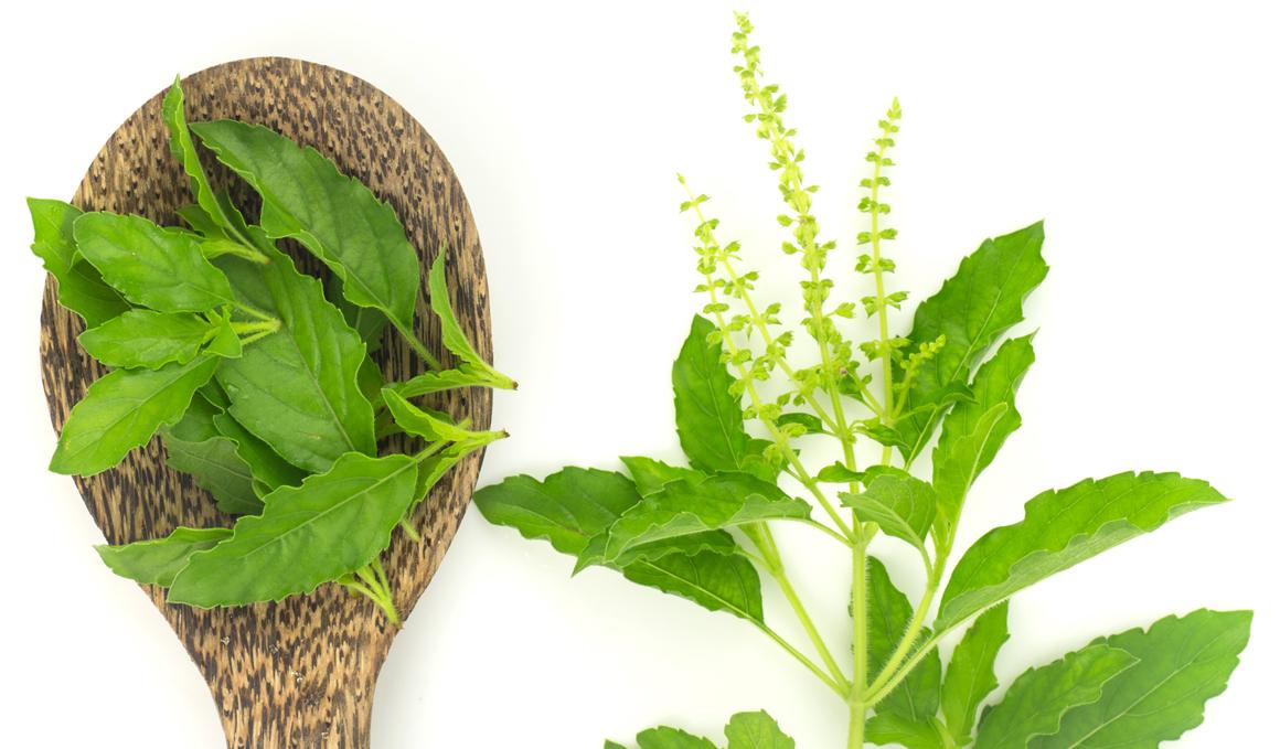 Plantas y hierbas adaptógenas para deportistas
